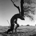 edouard-de-pazzi_artland_tree-ii