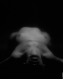 nus-en-noir-04-2003-2005-photo-e-de-pazzi